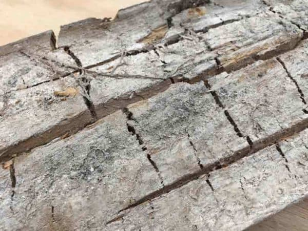 Cracked timber affected by dry rot