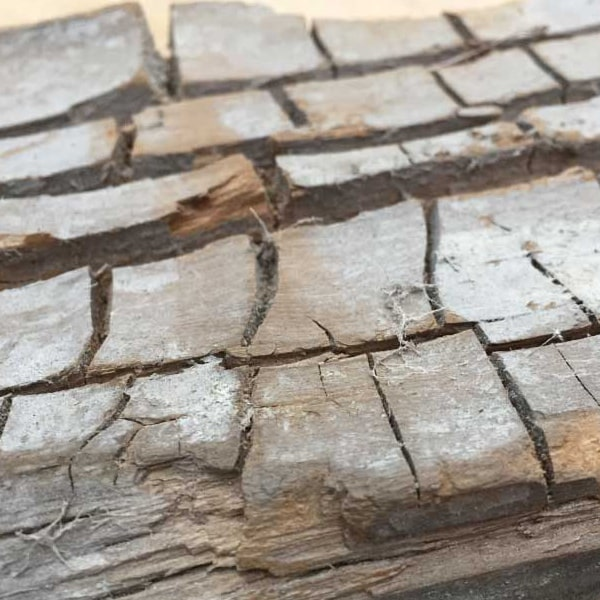 Timber affected by dry rot