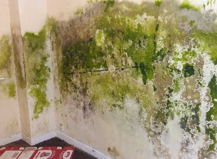 Green condensation caused mould growing on the wall