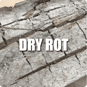 Dry rot service button
