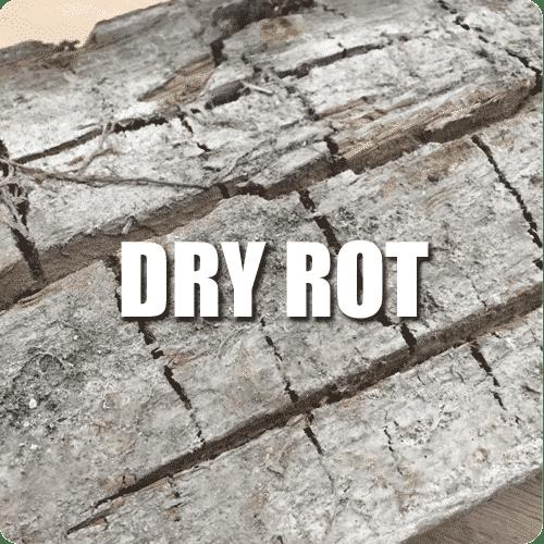 Dry rot edinburgh