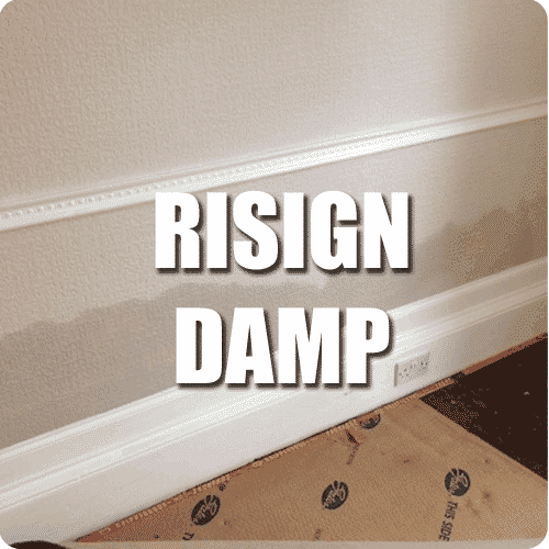 rising damp service button