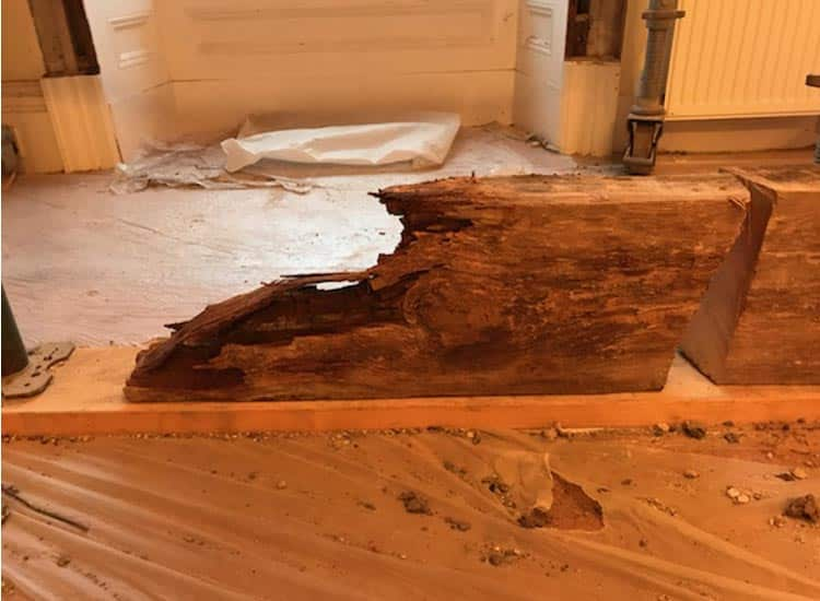 Timbers Damaged By Wet Rot