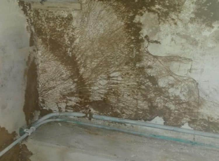 Wet rot growing on the wall - brown rot