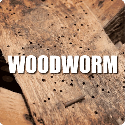 woodworm service button