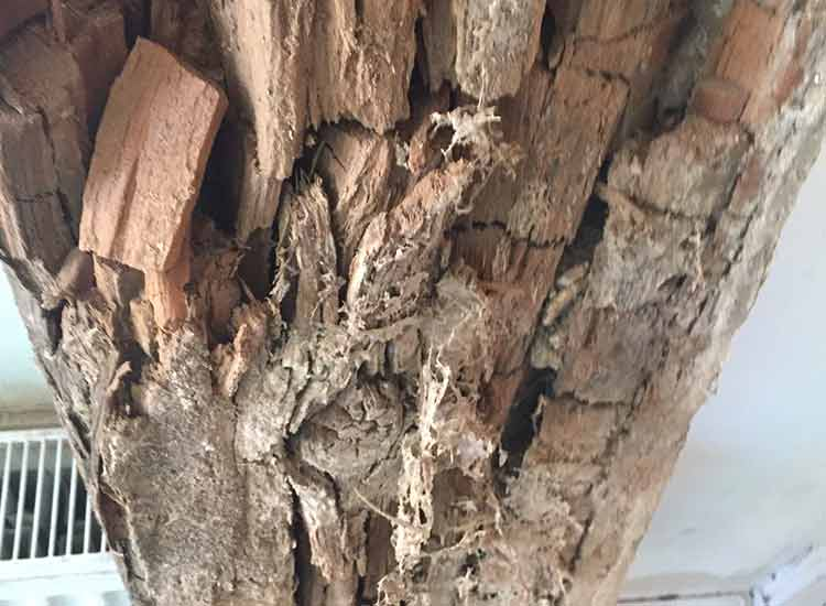 Timber affected by dry rot - cracked fibber