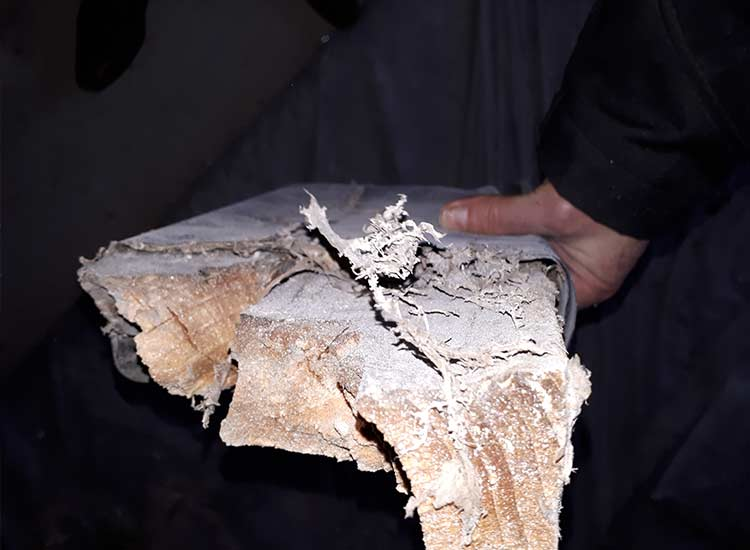 A person holding a timber affected by dry rot