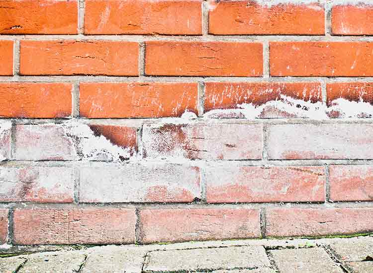 Rising damp caused salt deposits on the red brick wall