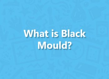 What is Black Mould?