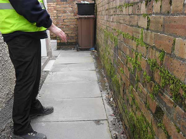 penetrating damp signs - moss on the wall