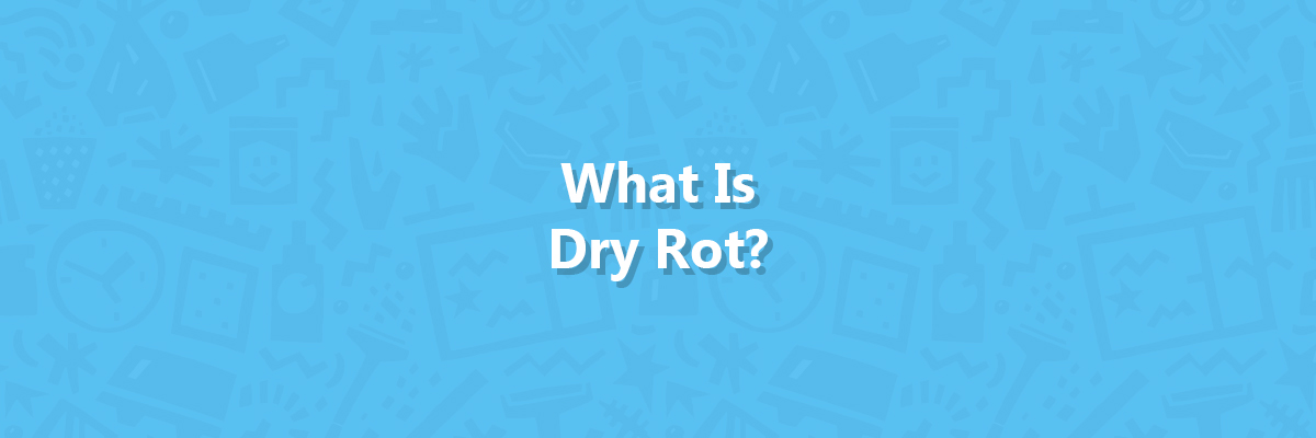 What is dry rot article cover image