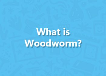 What Is Woodworm?